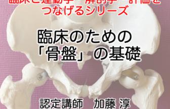 骨盤の基礎