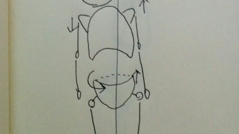 姿勢評価に関係する筋膜の考え方