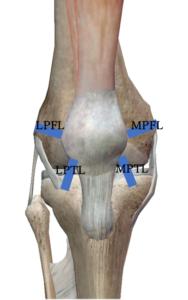 膝蓋支帯の深層部にある靭帯