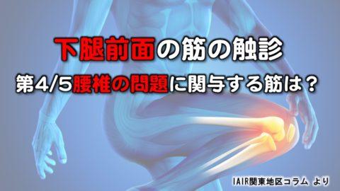 下腿前面の筋の触診〜第4/5腰椎の問題に関与する筋は?
