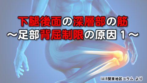 下腿後面の深層部の筋〜足部背屈制限の原因(1)