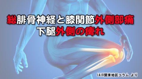 総腓骨神経と膝関節外側部痛・下腿外側の痺れ