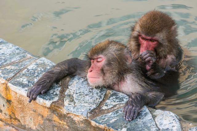 哺乳動物の協力