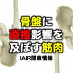 骨盤に直接影響を及ぼす筋肉