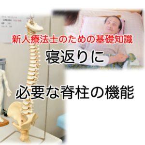 寝返りに必要な脊柱の機能